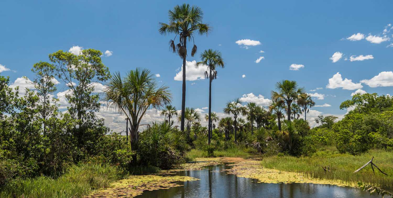Landscape of water, tall palm trees and blue sky.