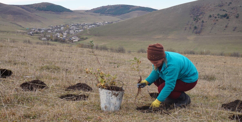 Woman planting trees.