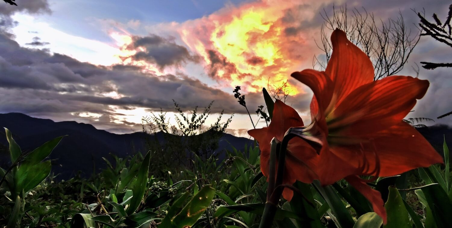 Vista with sunrise or sunset, striking red flower in the foreground.