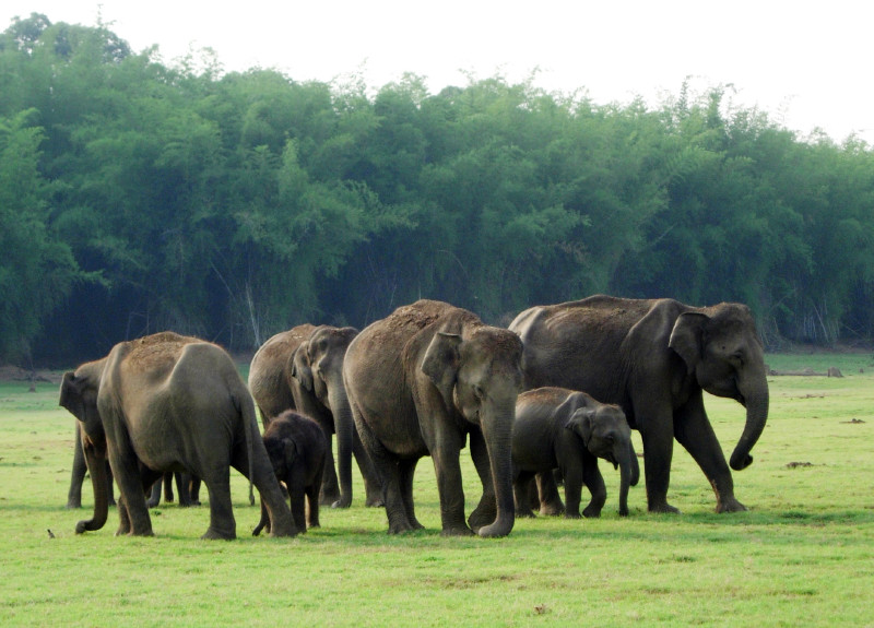 About 8 elephants of various sizes in a field, trees in the background.