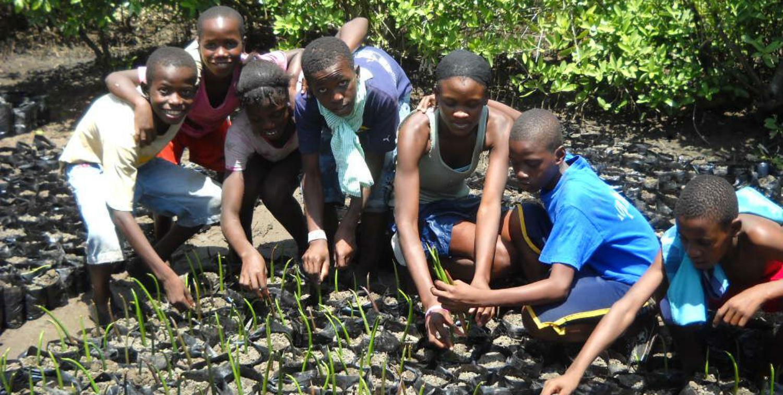 Children help FoProBiM with replanting in Haitian mangrove nursery.