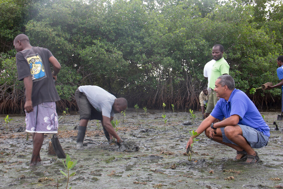 A small group of men plant tree seedlings in a muddy patch near established mangrove trees.