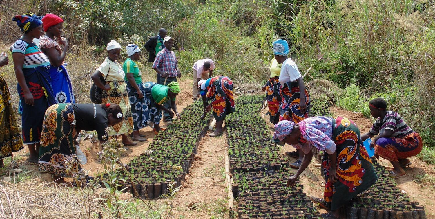 Group of women in colorful clothing plant tree seedlings.