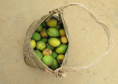 Oval green and yellowish fruits in straw satchel