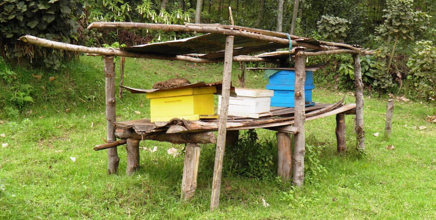 Beekeeping boxes on wooden platform.