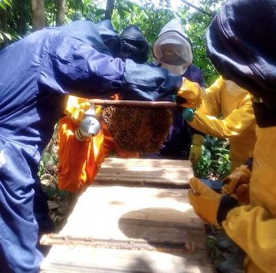 Four people wearing protective gear standing around wooden beehive. One person holds up hive, another smiles.