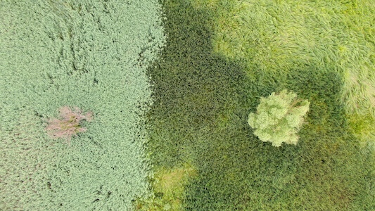 Aeriel view of wetland grasses and 2 trees.