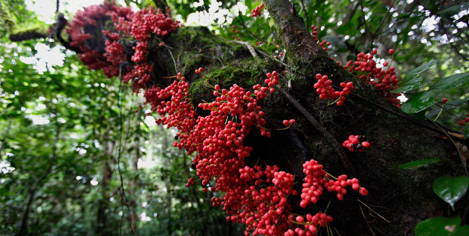 Close-up of red berries on tree trunk.