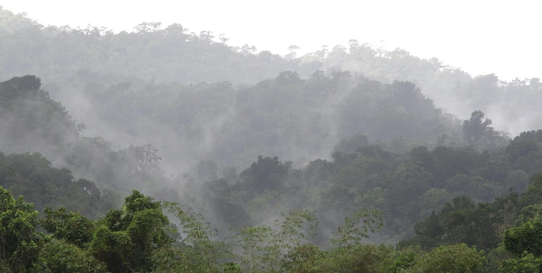 Cloudy forest vista