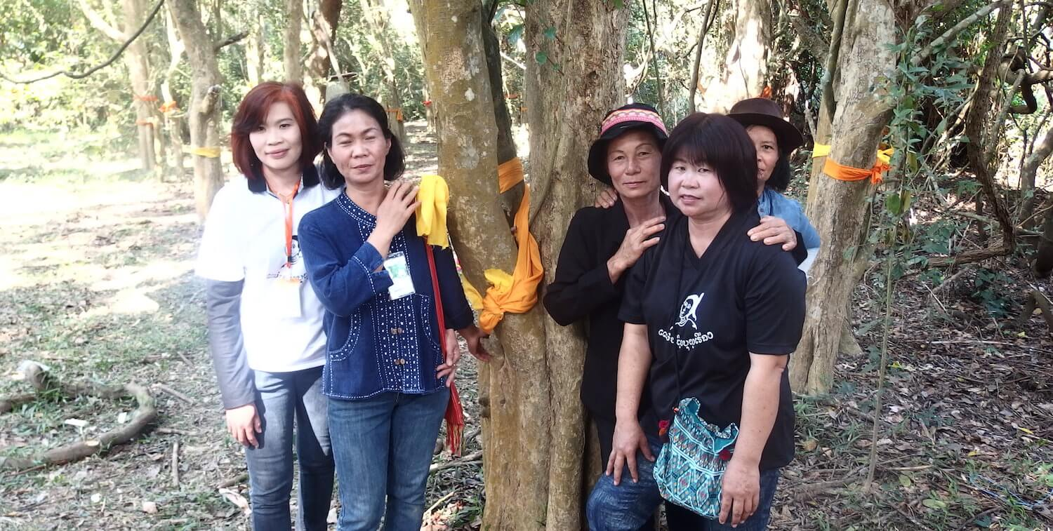 Five women standing next to several trees with yellow ribbons tied to them.