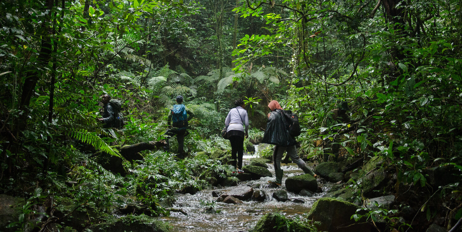 Four people walking through forest, crossing stream.