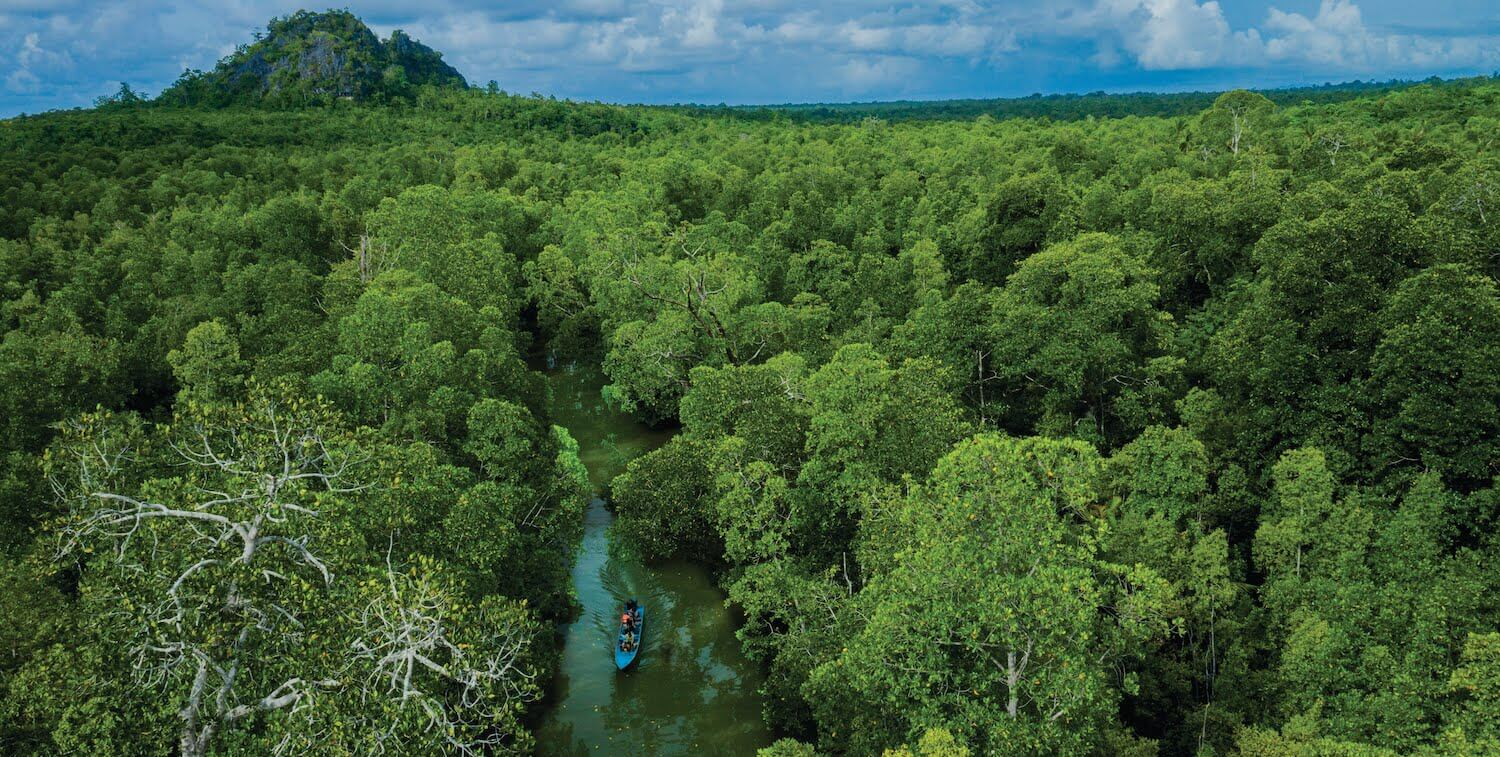 High-level view of canoe on narrow river going through forest.