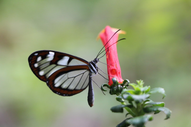 Black and white butterfly rests on a colorful flower.