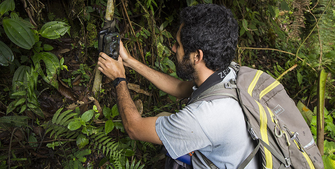 Man putting camera trap on tree.