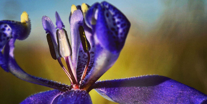 Close-up of purple flower.