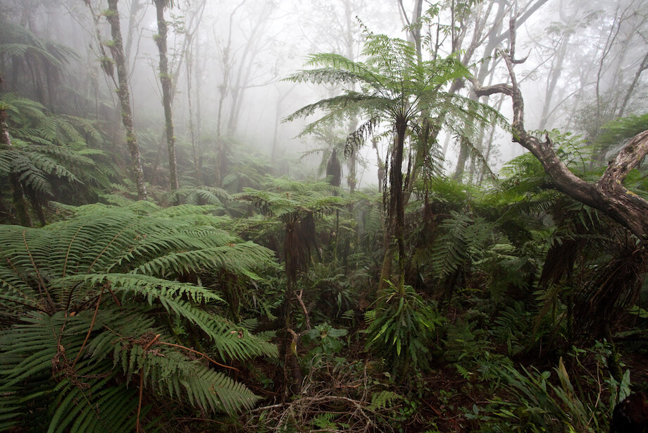 Ferns and trees amid mist.