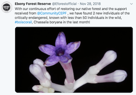 Ebony Forest Reserve flower tweet
