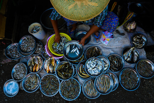 Overhead view of person wearing round hat selling a variety of fish, all in round bowls.