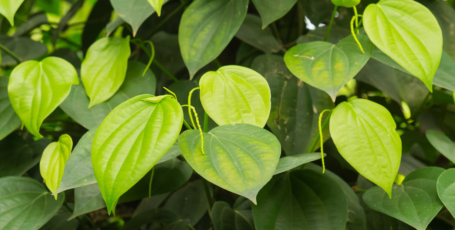 close-up of green leaves.