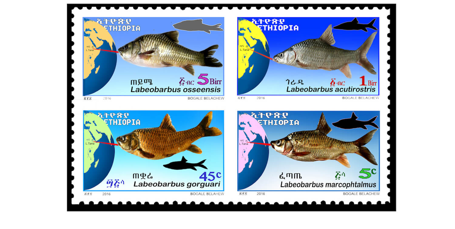 4 stamps with fish drawings on them
