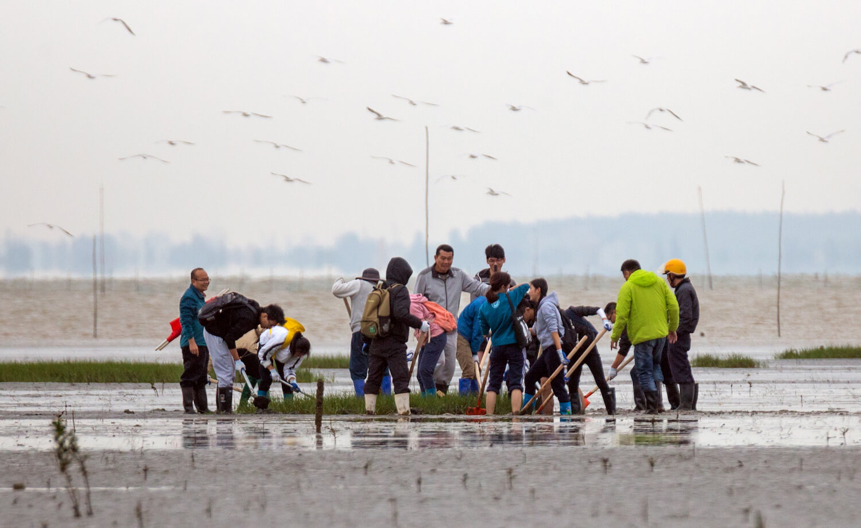 Group of volunteers working on mudflat, birds overhead.