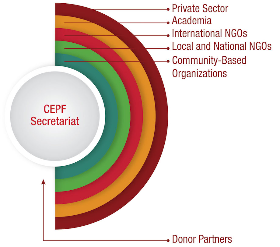 Graphic showing CEPF's relationship to donors and various types of grantees.