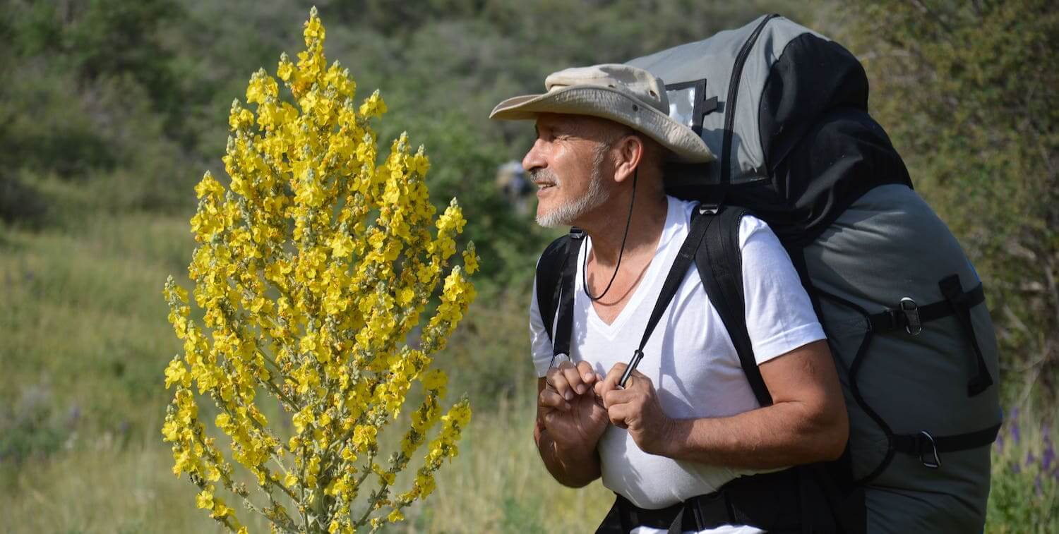 Man with large backpack standing next to yellow-flowering tree.