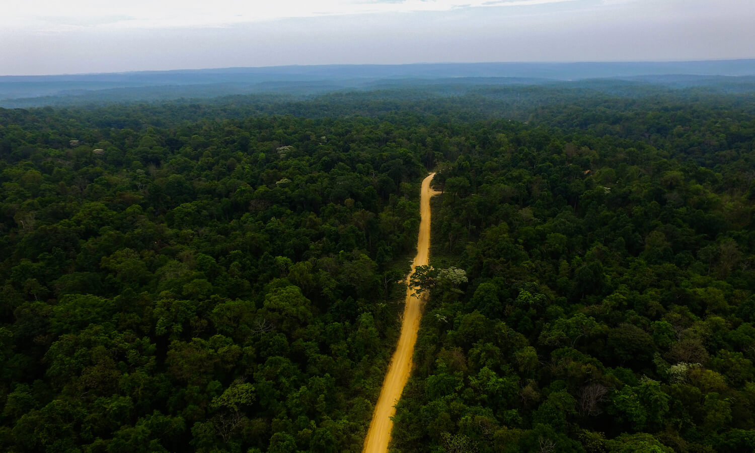 Aerial view of thick forest with yellow, dirt road running down the middle.