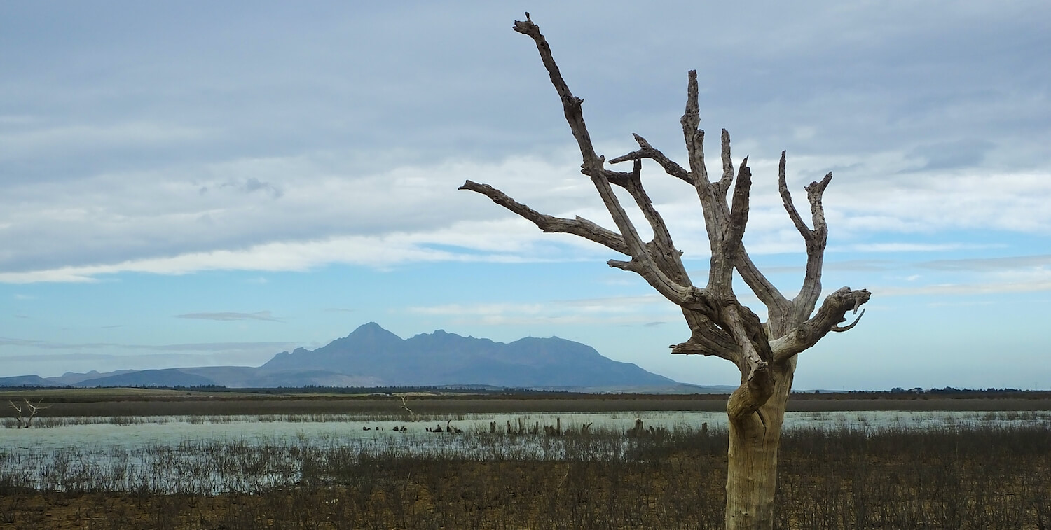 Single leafless tree in front of water and, beyond that, mountains.