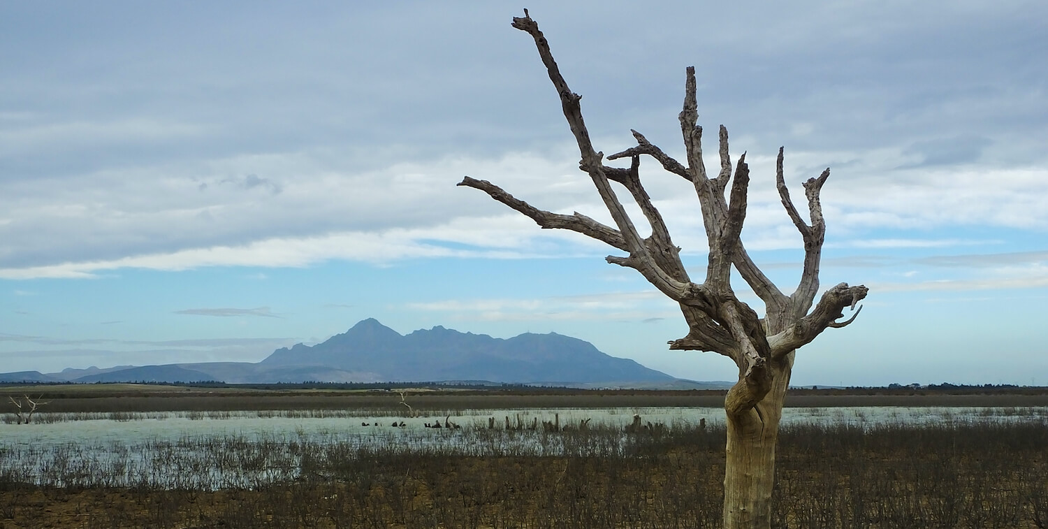 Flat landscape, barren tree in foreground and mountain range in background.