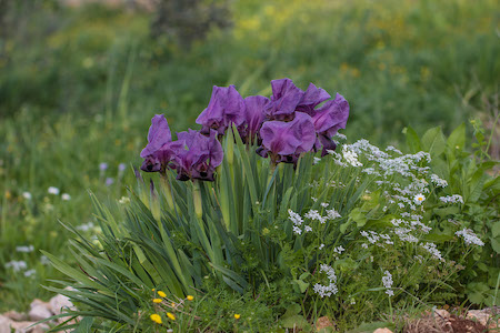 Group of purple flowers growing from ground.