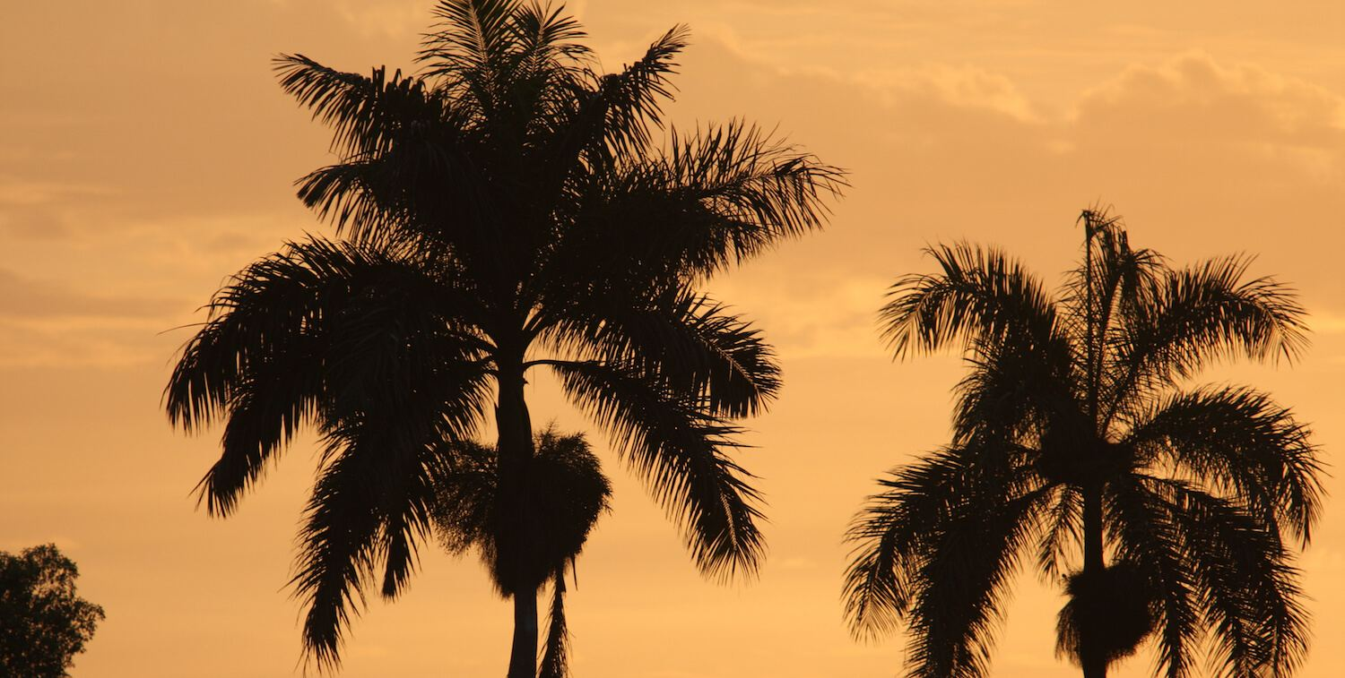 Two palm trees at twilight hour.
