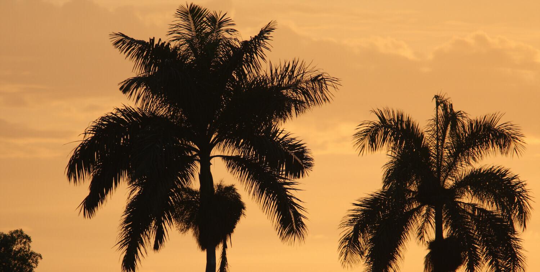 Tops of 2 palm trees against orange sky