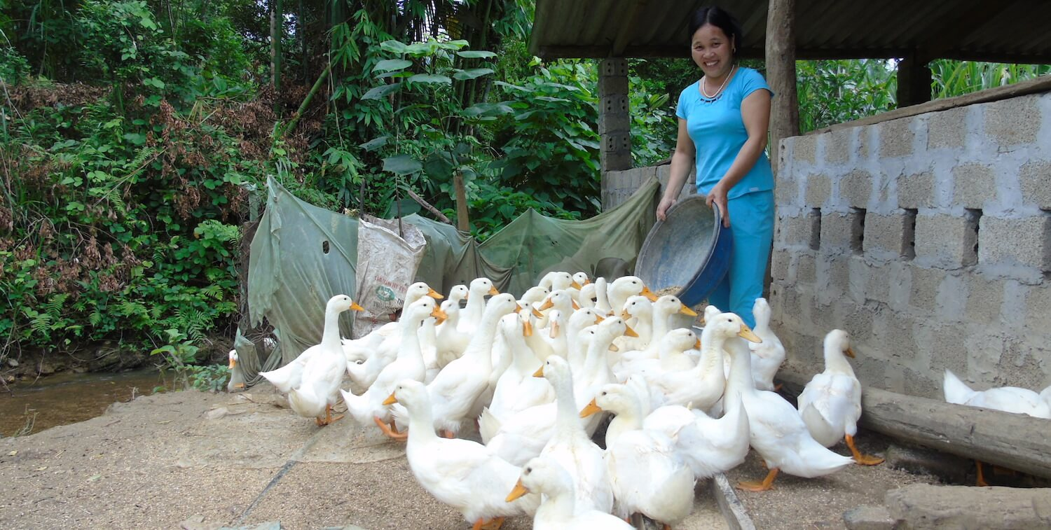 Smiling woman feeds about 20 ducks from round basin she is holding.