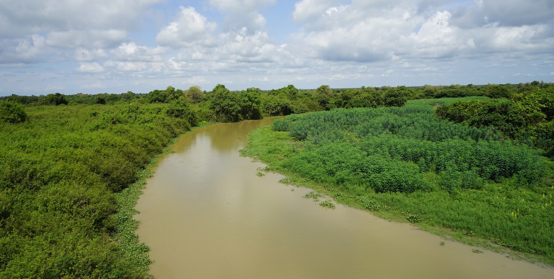 Narrow, brown river curving through low greenery.