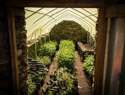 Inside small tree nursery, covered with planted saplings on the ground.
