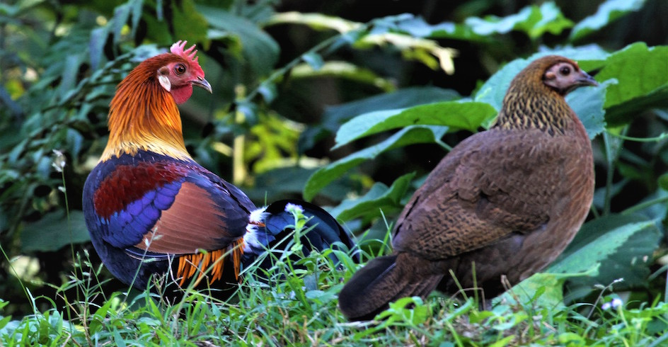 Celebrating Biodiversity: Year of the Rooster   CEPF