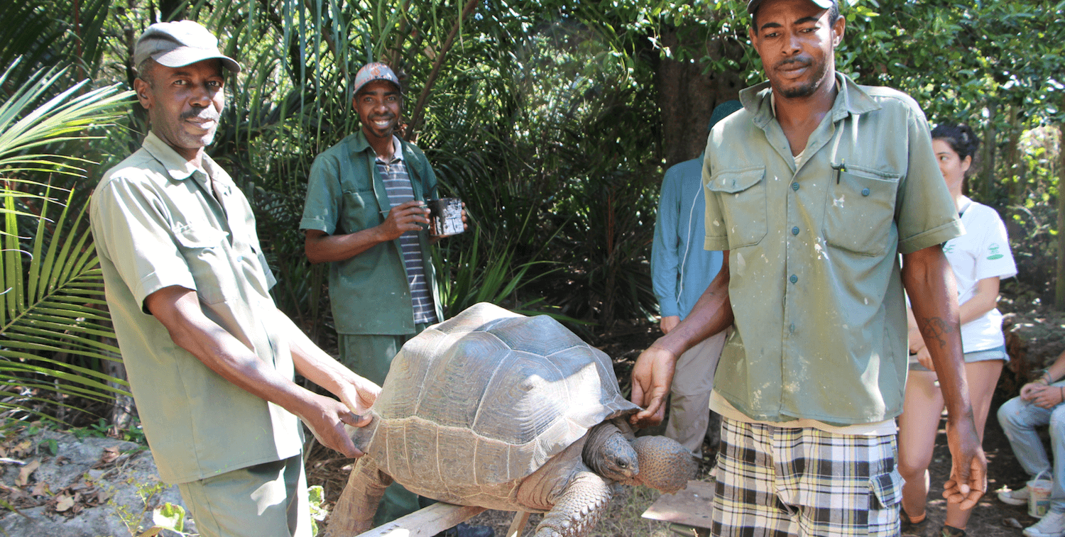 Two men carry a large tortoise, other man smiles in the background.