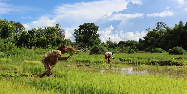 2 people working in marshy field.