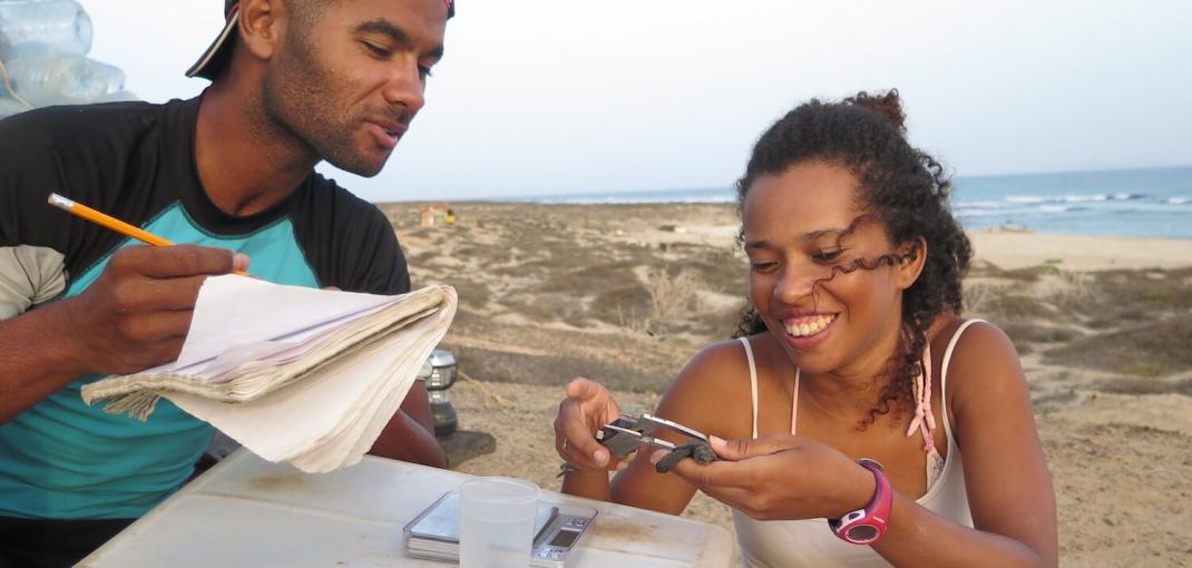 Two people on beach, one with notebook and the other measuring sea turtle hatchling.