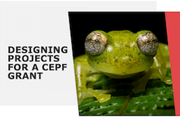 Presentation screenshot with green frog photo