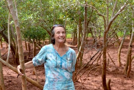 Etheve standing in mangrove.