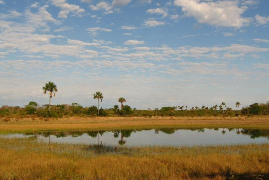 Yellowish grass and small body of water in foreground, a few palm trees in the background.