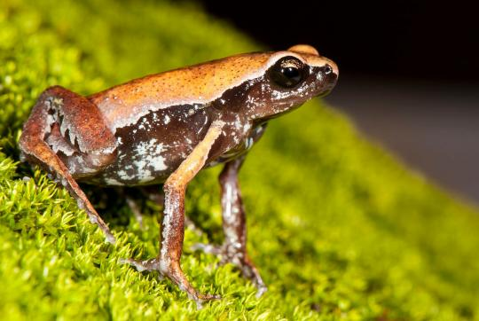 Close-up of brown and orange frog on green surface.