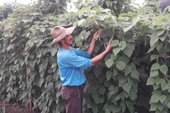 Man showing beans in greenhouse.