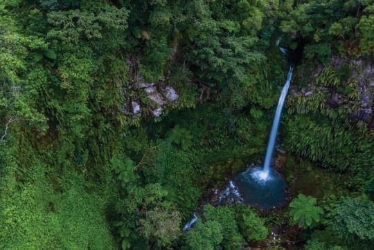 Aerial view of lush forest with waterfall.