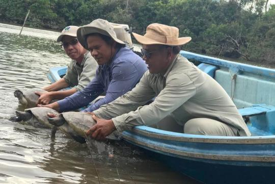 Three men in skiff release three turtles into the water.