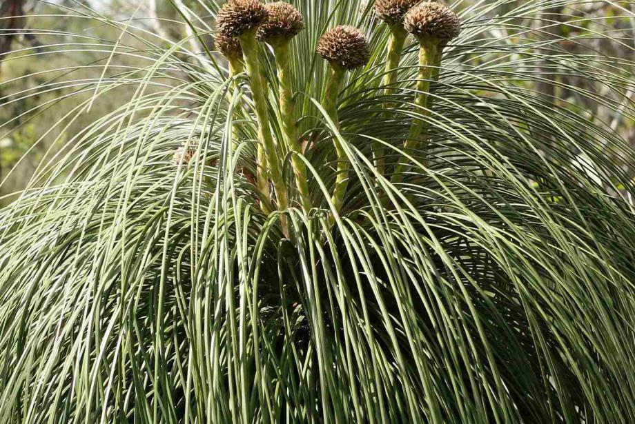 Close-up of grassy plant.