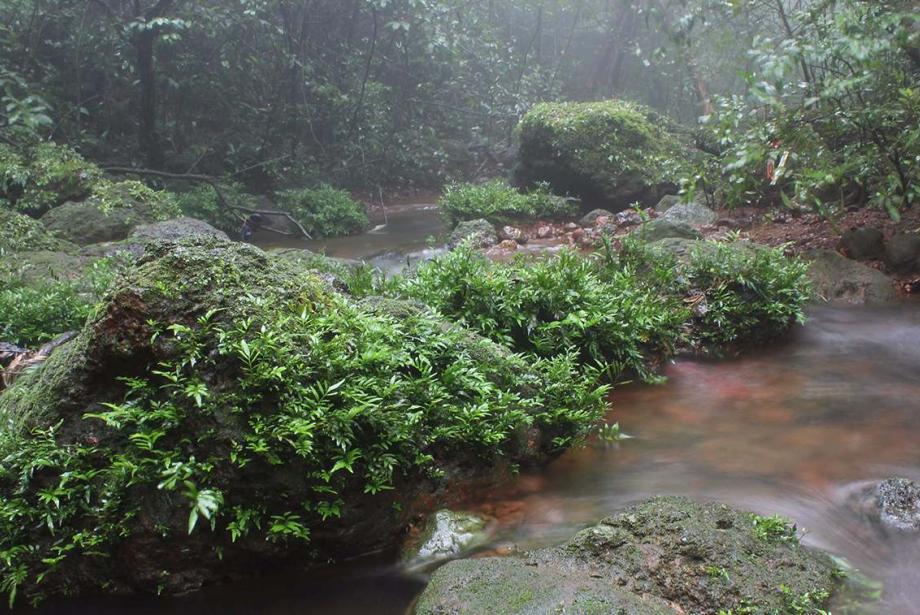 Misty stream with lush foliage.