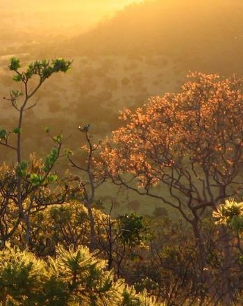 Cerrado landscape at twilight hour.